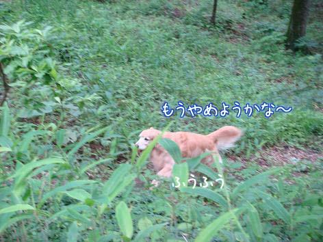 ちょっと疲れやすくなった五郎_f0064906_1825379.jpg