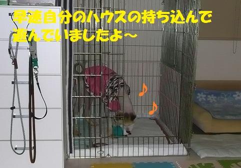 f0121712_1058770.jpg