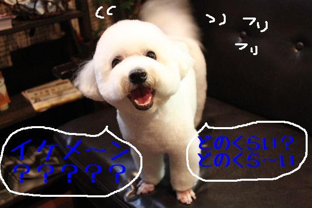 b0130018_1126488.jpg