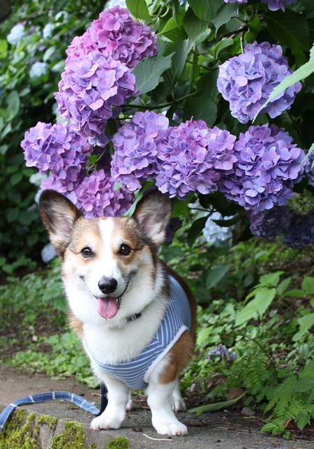 紫陽花の季節_f0155118_7464693.jpg