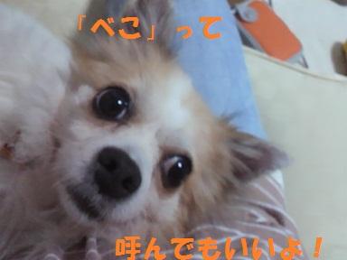d0169340_2223263.jpg