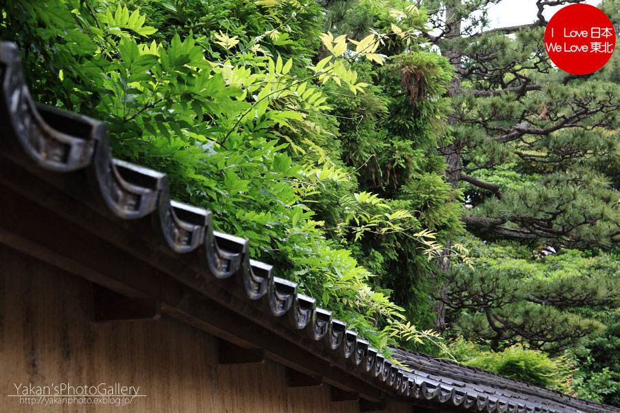 「そうだ 金沢、行こう。」と誘われ着物美女写真撮影 02 長町の武家屋敷跡石畳の小路編~ツバメ追加~_b0157849_22452474.jpg