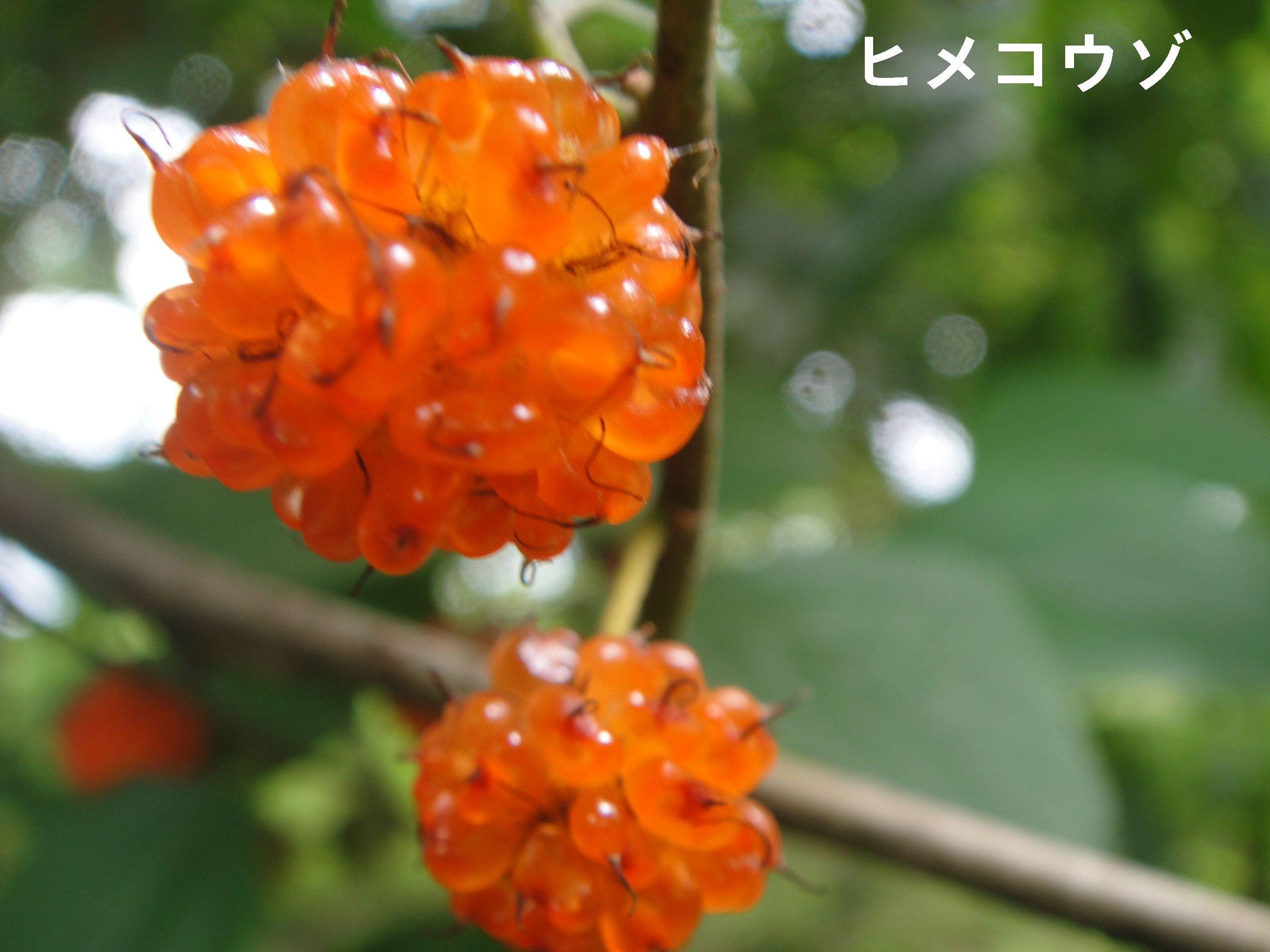 H23年6月度植物調査_c0108460_22231310.jpg
