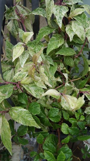 お気に入りの植物~❤_f0029571_9583644.jpg