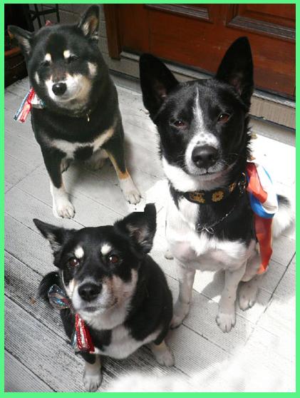 保護犬イベントお知らせ。_e0236072_23201338.jpg