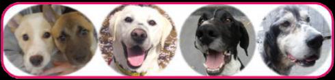 保護犬イベントお知らせ。_e0236072_23215350.jpg
