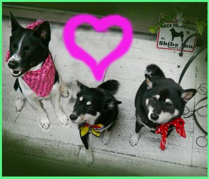 保護犬イベントお知らせ。_e0236072_23262943.jpg