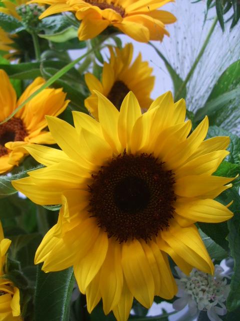 オークリーフ(父の日に贈る花束)_f0049672_16294678.jpg
