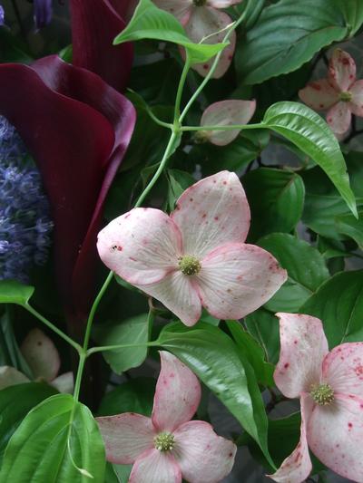 オークリーフ(父の日に贈る花束)_f0049672_16371494.jpg