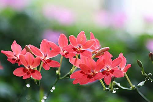 トケイソウ、テリハノイバラが咲きました。_f0030085_213726.jpg