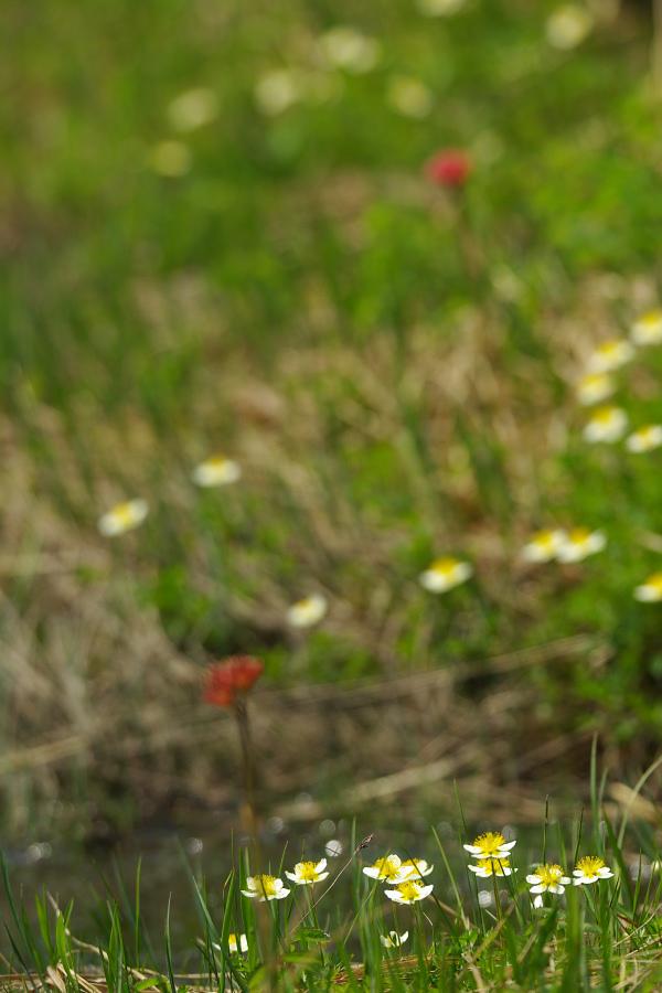 初夏の湿原に咲く_e0051186_20514848.jpg