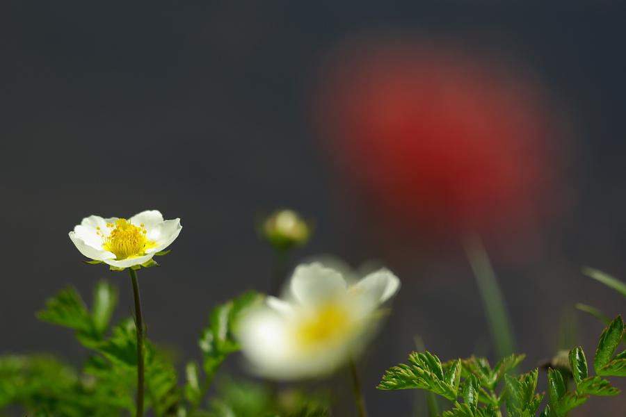 初夏の湿原に咲く_e0051186_2052671.jpg