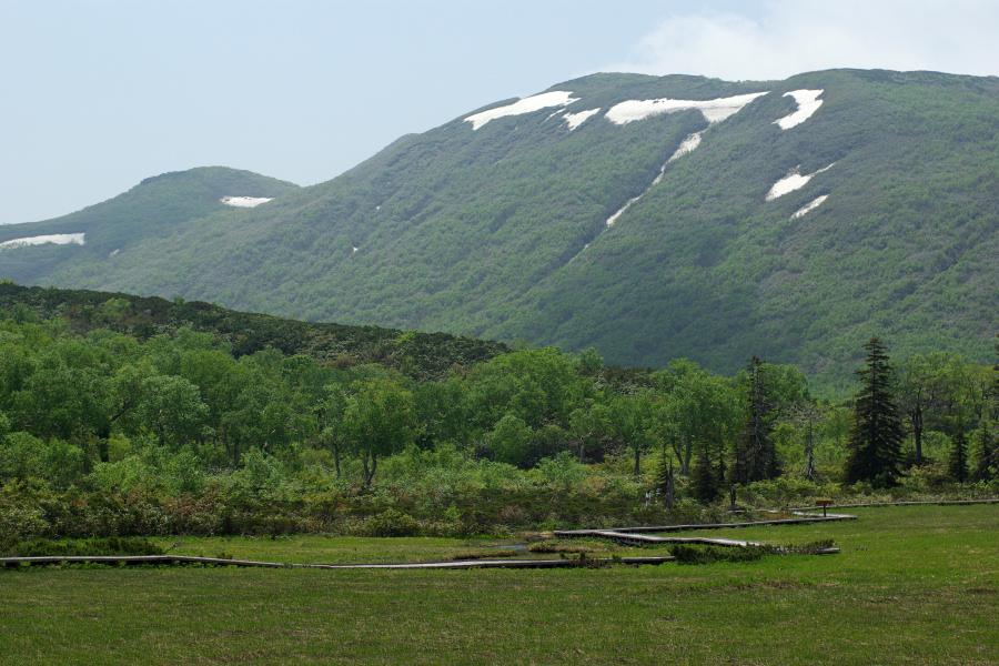 初夏の湿原に咲く_e0051186_20532914.jpg