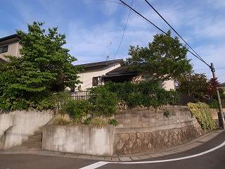 今、在る樹木や草花。 外構計画_f0059988_19443859.jpg