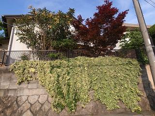 今、在る樹木や草花。 外構計画_f0059988_19445321.jpg