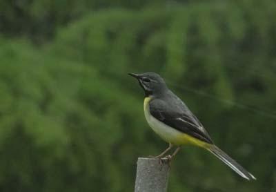 鳥の合唱_e0120896_6522995.jpg