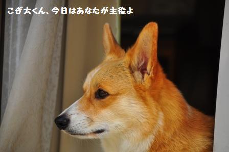 f0212597_15541139.jpg