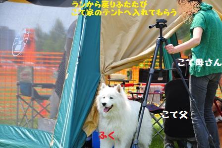 f0212597_16231480.jpg