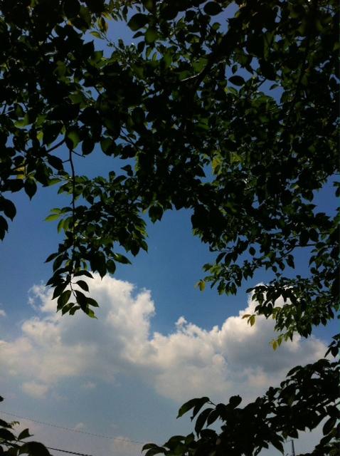 いい天気!_c0127403_1132259.jpg