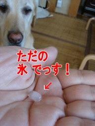 b0226221_15493083.jpg