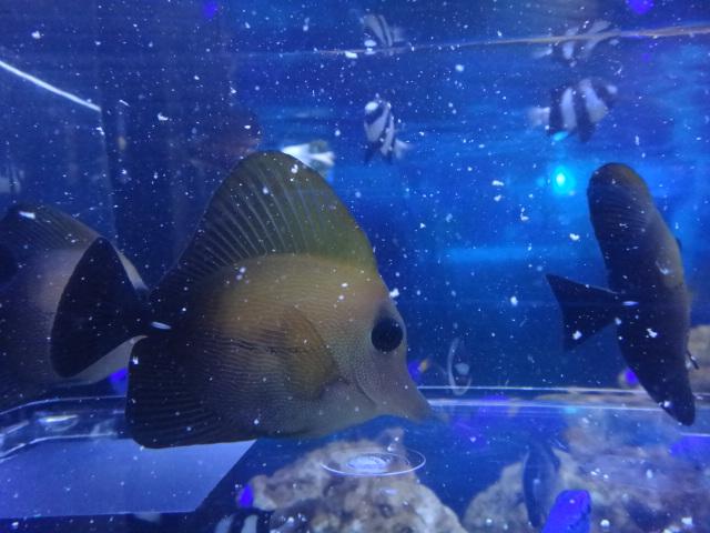 海水魚・水草・淡水魚_f0189122_12515195.jpg