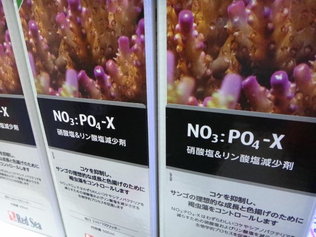 海水魚・水草・淡水魚_f0189122_12565150.jpg