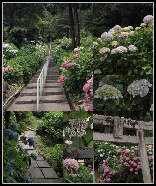 紫陽花 in 吉備津神社_c0026824_1715483.jpg