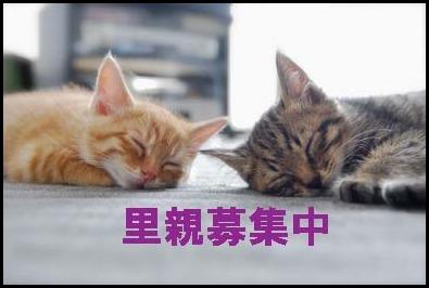 平和だにゃ~~~_f0166234_1121159.jpg