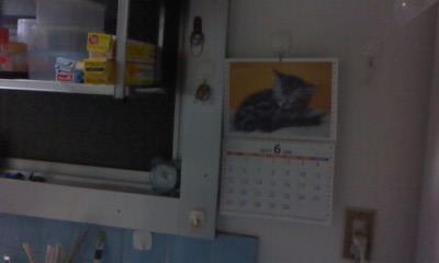 うちの猫_b0217741_21334344.jpg
