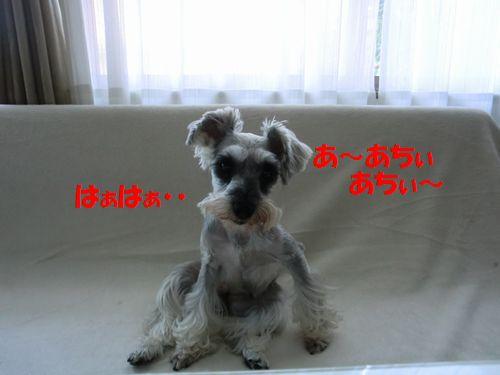 b0206444_2012854.jpg