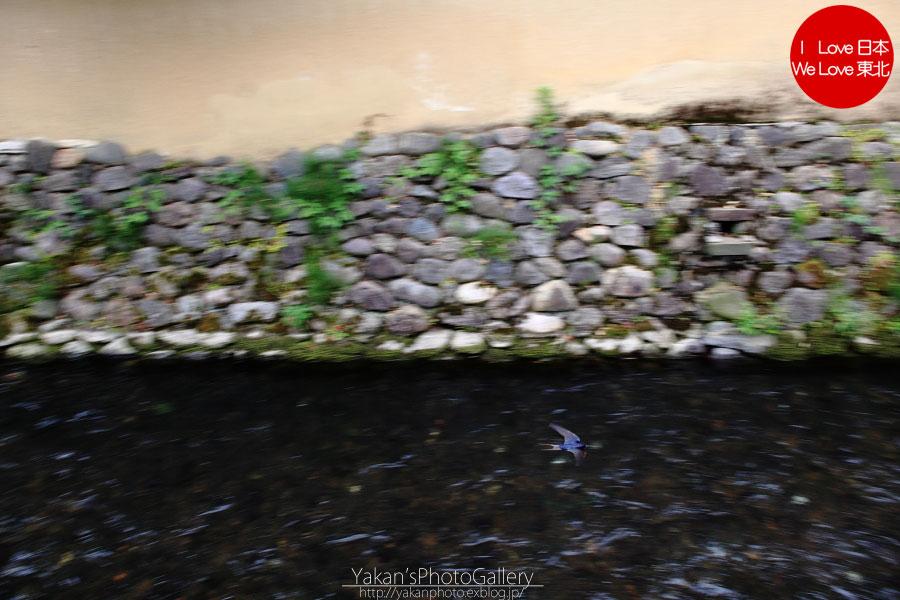「そうだ 金沢、行こう。」と誘われ着物美女写真撮影 02 長町の武家屋敷跡石畳の小路編~ツバメ追加~_b0157849_537556.jpg