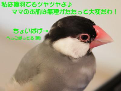 b0158061_20535876.jpg