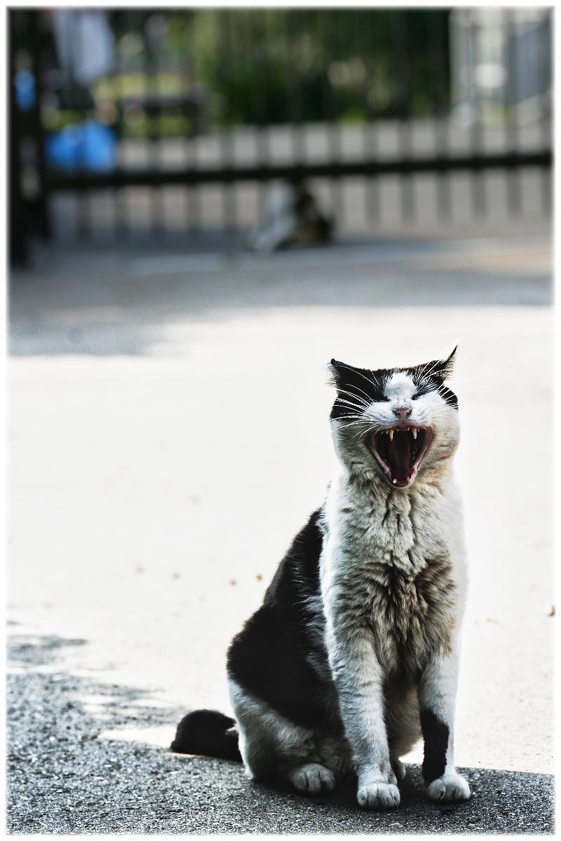 猫にゃん_f0021869_02059100.jpg