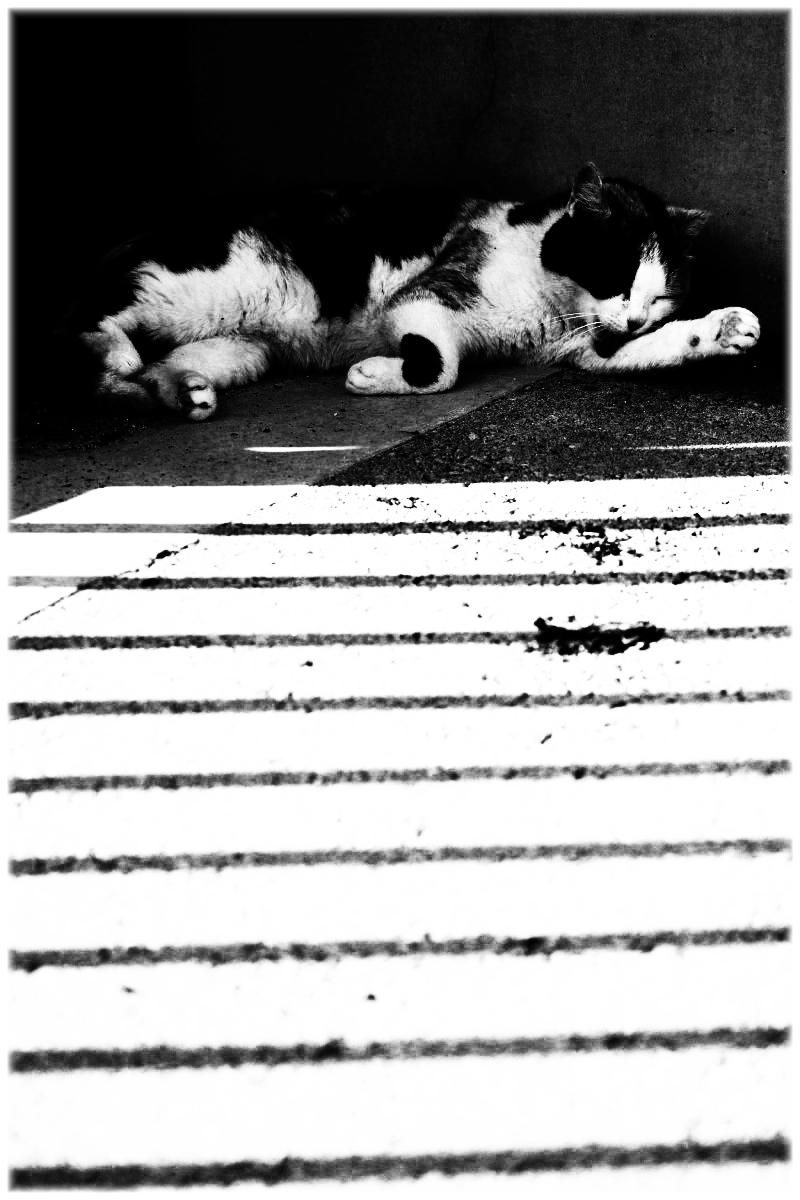 猫にゃん_f0021869_234194.jpg