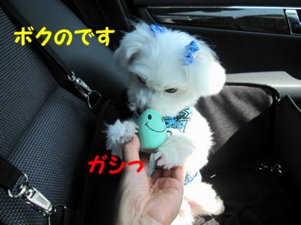 b0193480_1617691.jpg
