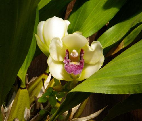 バラやクレマチス、今咲いている花をちょこっと♪_a0136293_17343217.jpg
