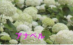 b0122401_236385.jpg