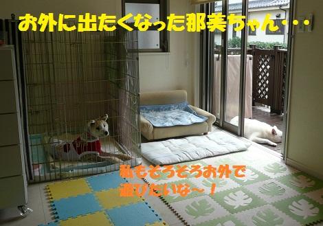 f0121712_1111133.jpg