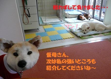 f0121712_1125193.jpg
