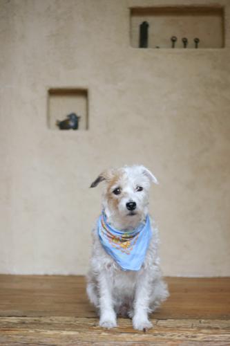 今日のロロ ..忠犬ロロ公_f0032814_1942926.jpg