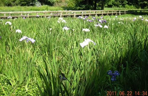 野川を下って深大寺、神代植物園水生公園へ_e0223735_1134527.jpg