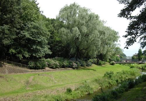 野川を下って深大寺、神代植物園水生公園へ_e0223735_11354767.jpg