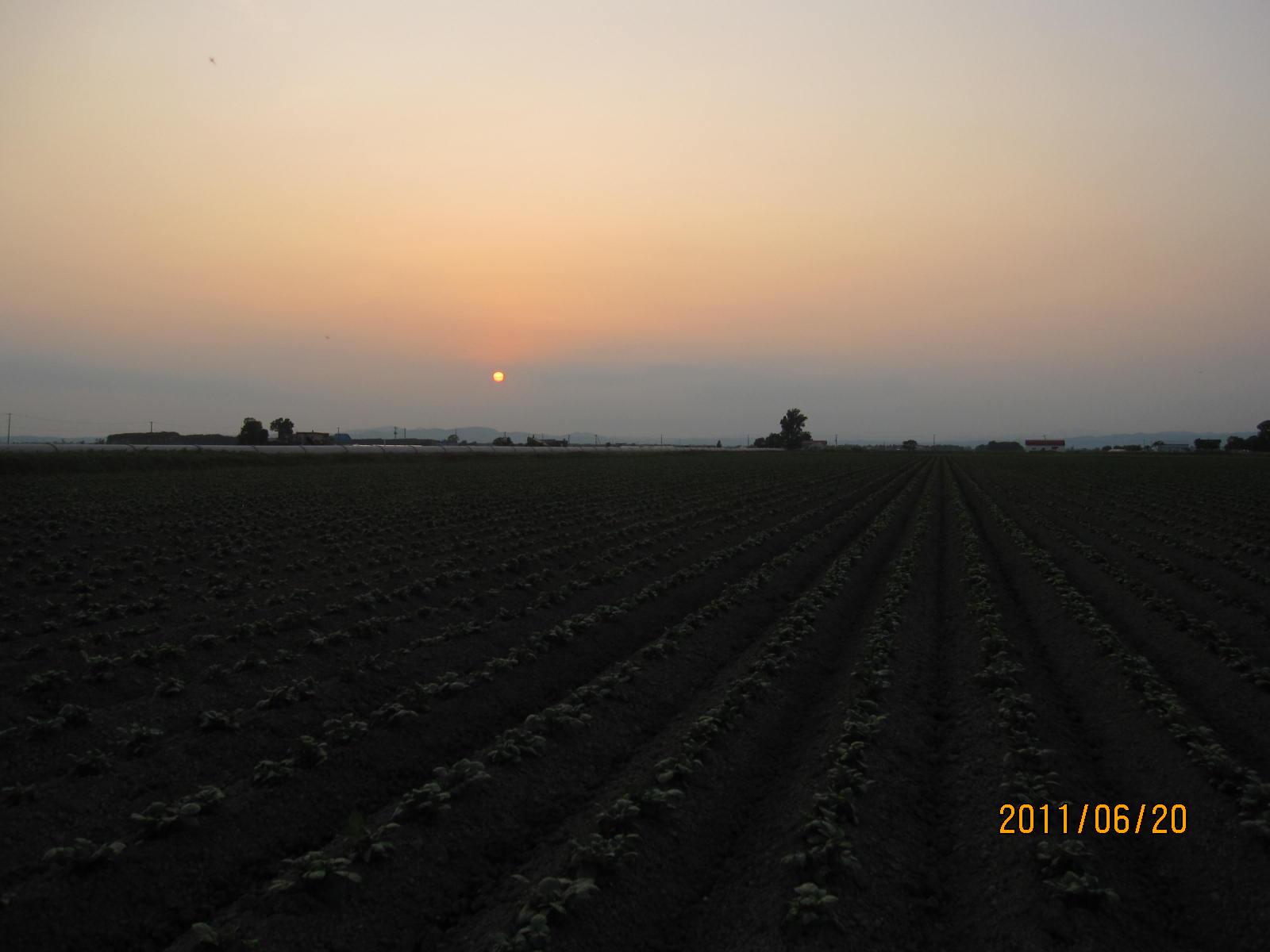 ジャガイモ畑_f0231042_10274214.jpg