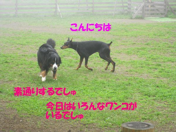 a0108146_15475560.jpg