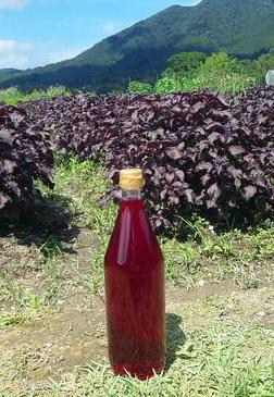 赤紫蘇ジュース_b0213347_23202548.jpg