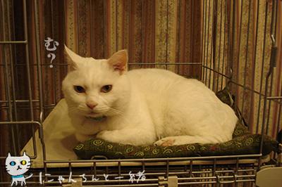 猫天気予報士に狂い無し_e0031853_337212.jpg