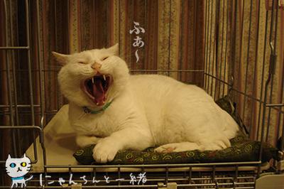 猫天気予報士に狂い無し_e0031853_3381364.jpg