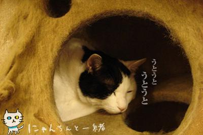 猫天気予報士に狂い無し_e0031853_3392358.jpg
