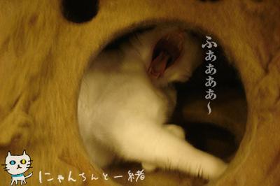 猫天気予報士に狂い無し_e0031853_3422249.jpg