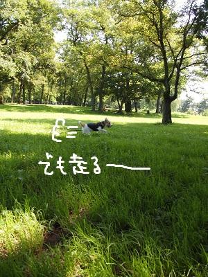b0092580_091478.jpg
